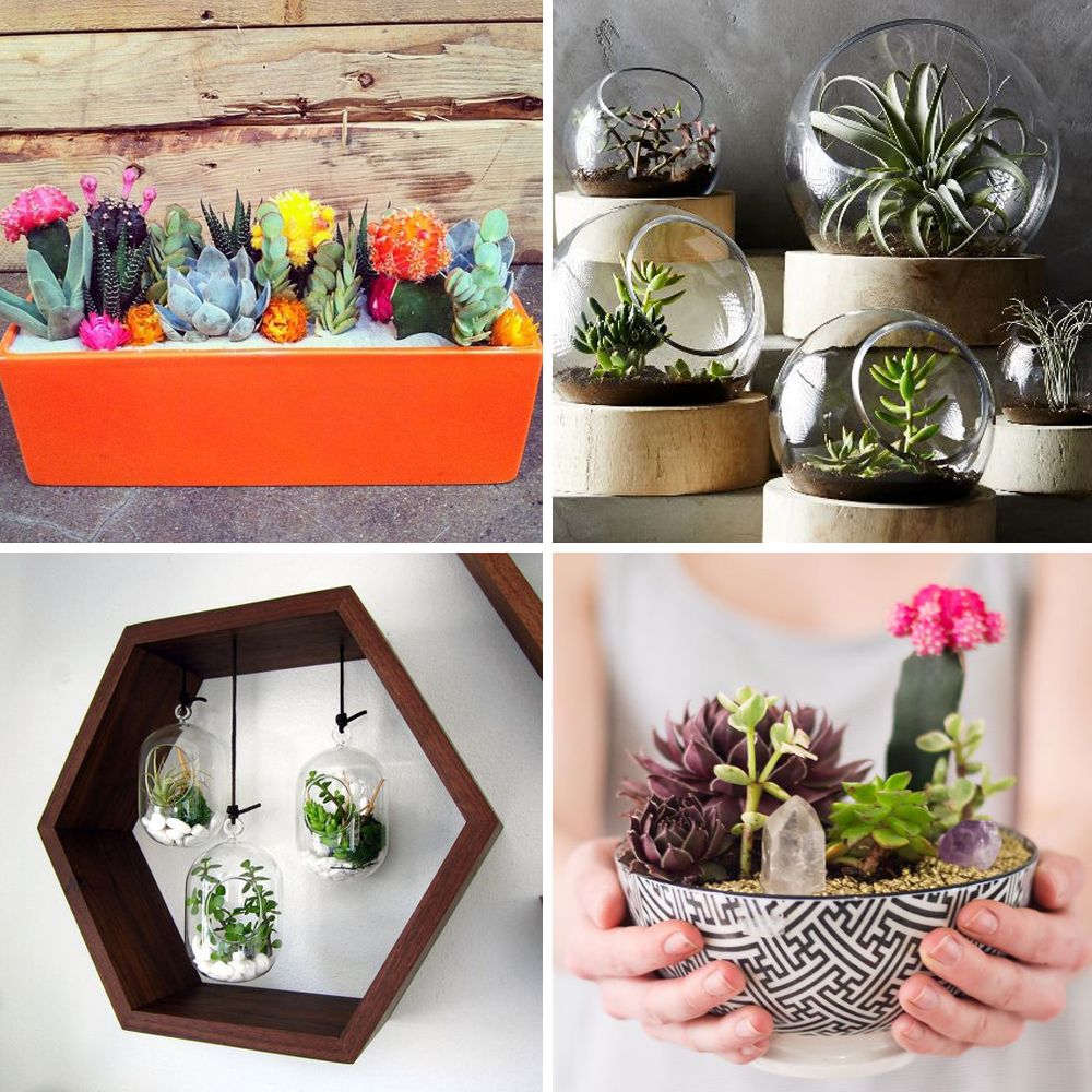 Pinterest 25 id es d co avec des cactus des succulentes for Deco idees magazine