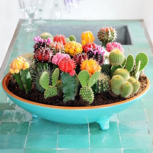 Pinterest 25 Idees Deco Avec Des Cactus Des Succulentes Et Des