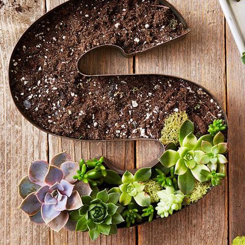 104 Best Images About Terraria On Pinterest: Pinterest: 25 Idées Déco Avec Des Cactus, Des Succulentes
