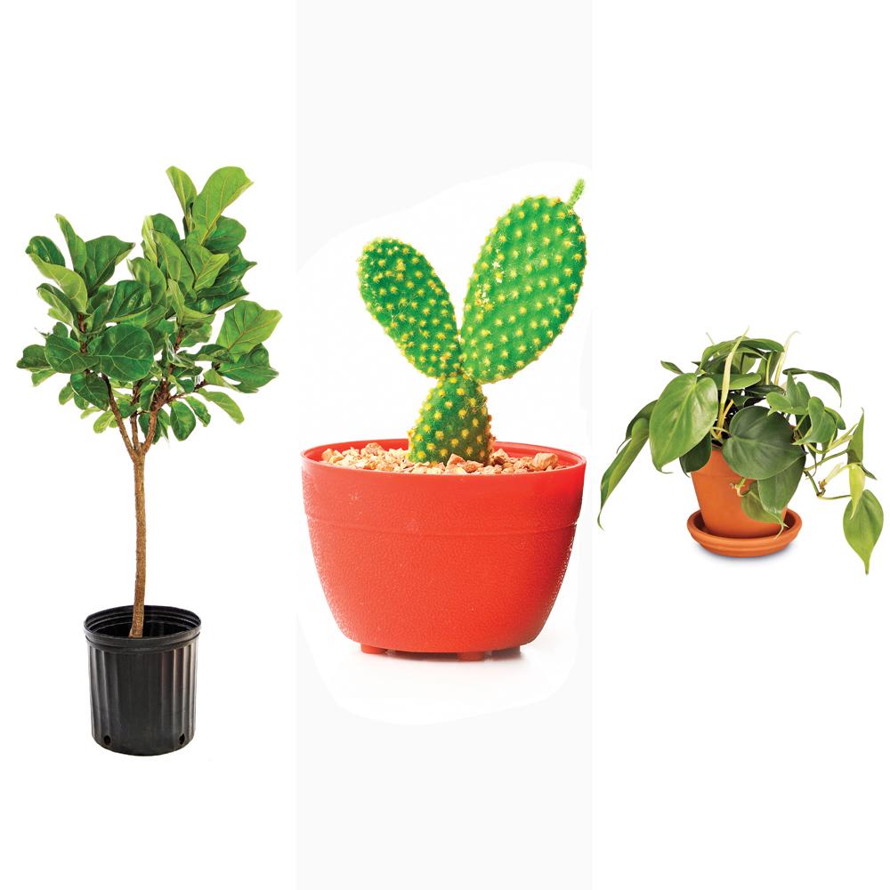 5 vari t s de plantes int rieures tendance trucs et for Plantes d interieures