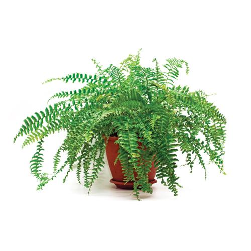 5 Varietes De Plantes Interieures Tendance Je Decore
