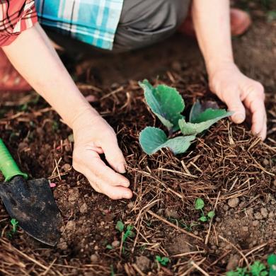 7 trucs pour jardiner vert trucs et conseils jardinage for Conseil pour jardiner