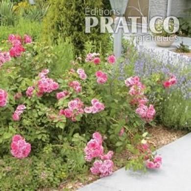 la taille des rosiers rustiques en tapes jardinage et ext rieur pratico pratique. Black Bedroom Furniture Sets. Home Design Ideas
