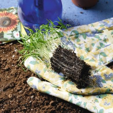 En f vrier c 39 est le temps de semer trucs et conseils jardinage et ext rieur pratico - Planter en fevrier ...