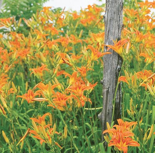 Fleur exterieur toute saison 28 images plante fleurie for Plante exterieur sans entretien