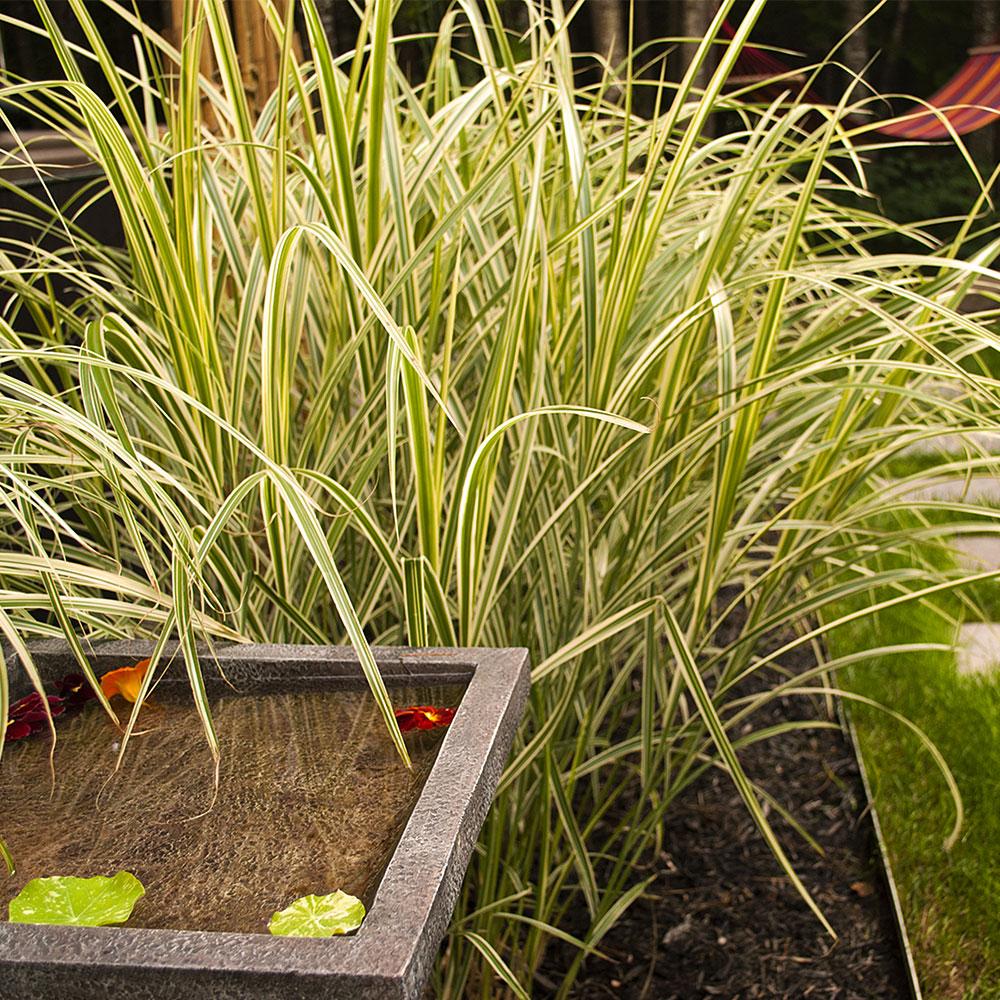 V g taux textur s jardin inspirations jardinage et for Vegetaux exterieur