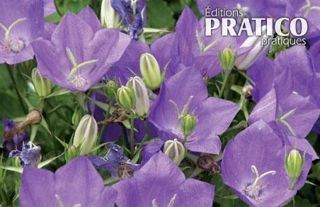 Cinq plantes vivaces sans entretien trucs et conseils for Plantes fleuries vivaces