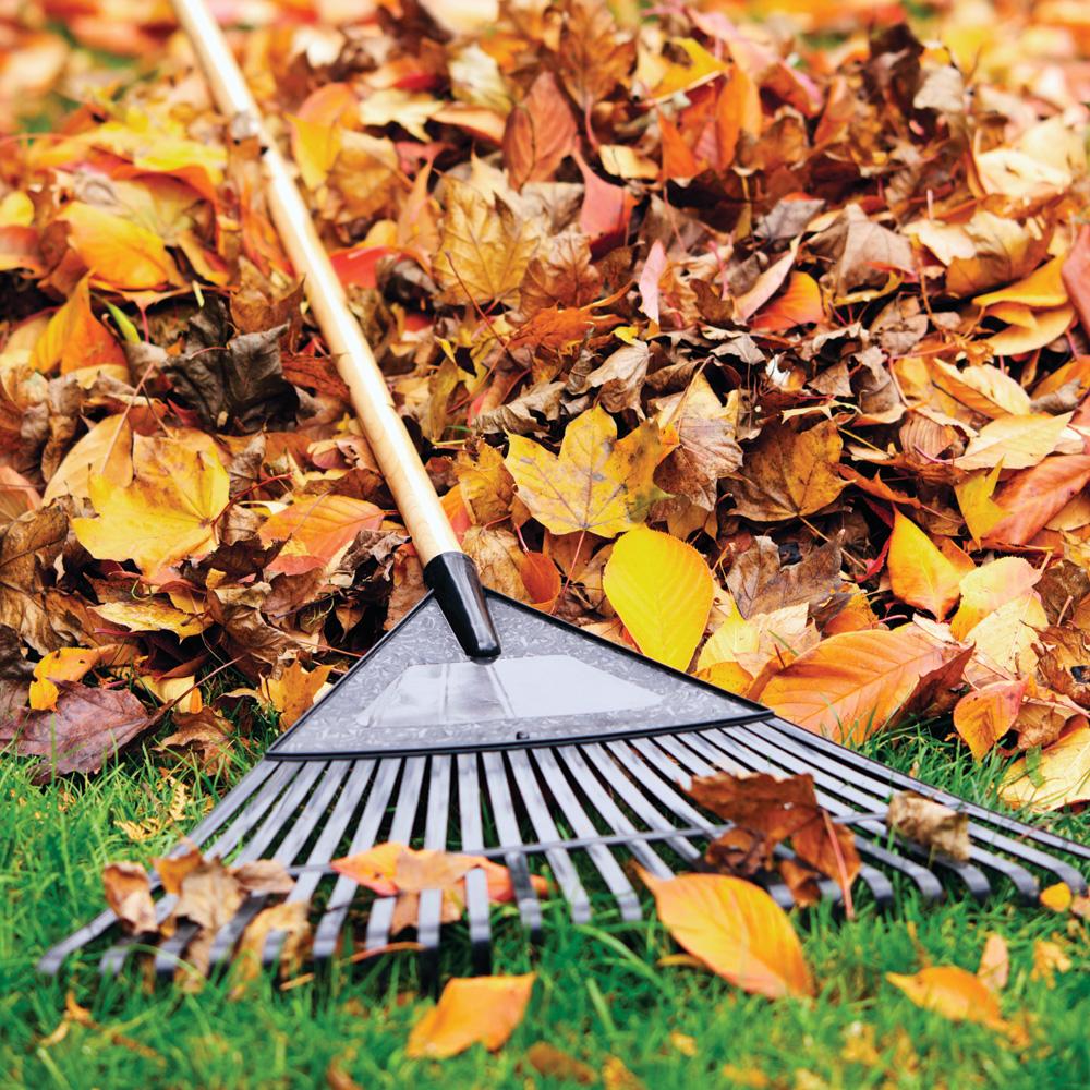 Quoi faire sur notre terrain l 39 automne trucs et for Jardinage conseil