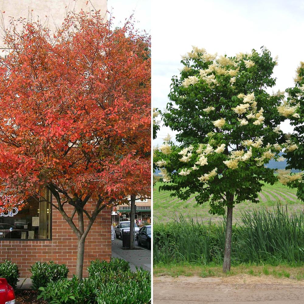 Les 10 Meilleures Variétés D'arbres à Planter En Situation
