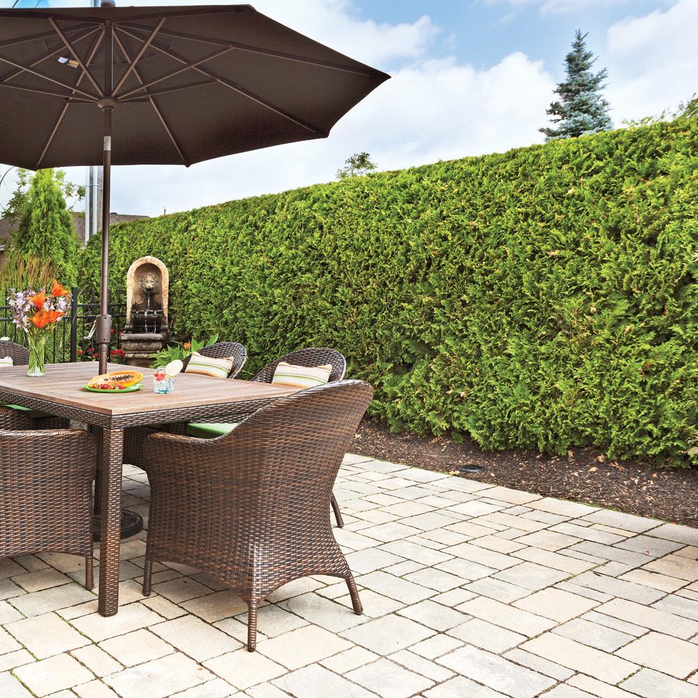 comment tailler une haie trucs et conseils jardinage et ext rieur pratico pratique. Black Bedroom Furniture Sets. Home Design Ideas