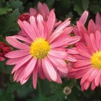 20 plantes qui fleurissent tard en saison