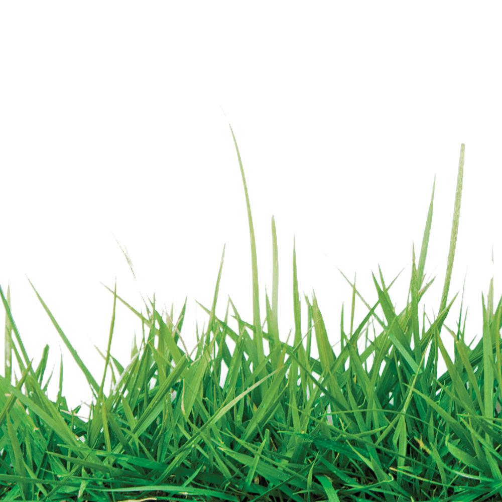 trucs pour avoir une belle pelouse verte trucs et conseils jardinage et ext rieur pratico. Black Bedroom Furniture Sets. Home Design Ideas